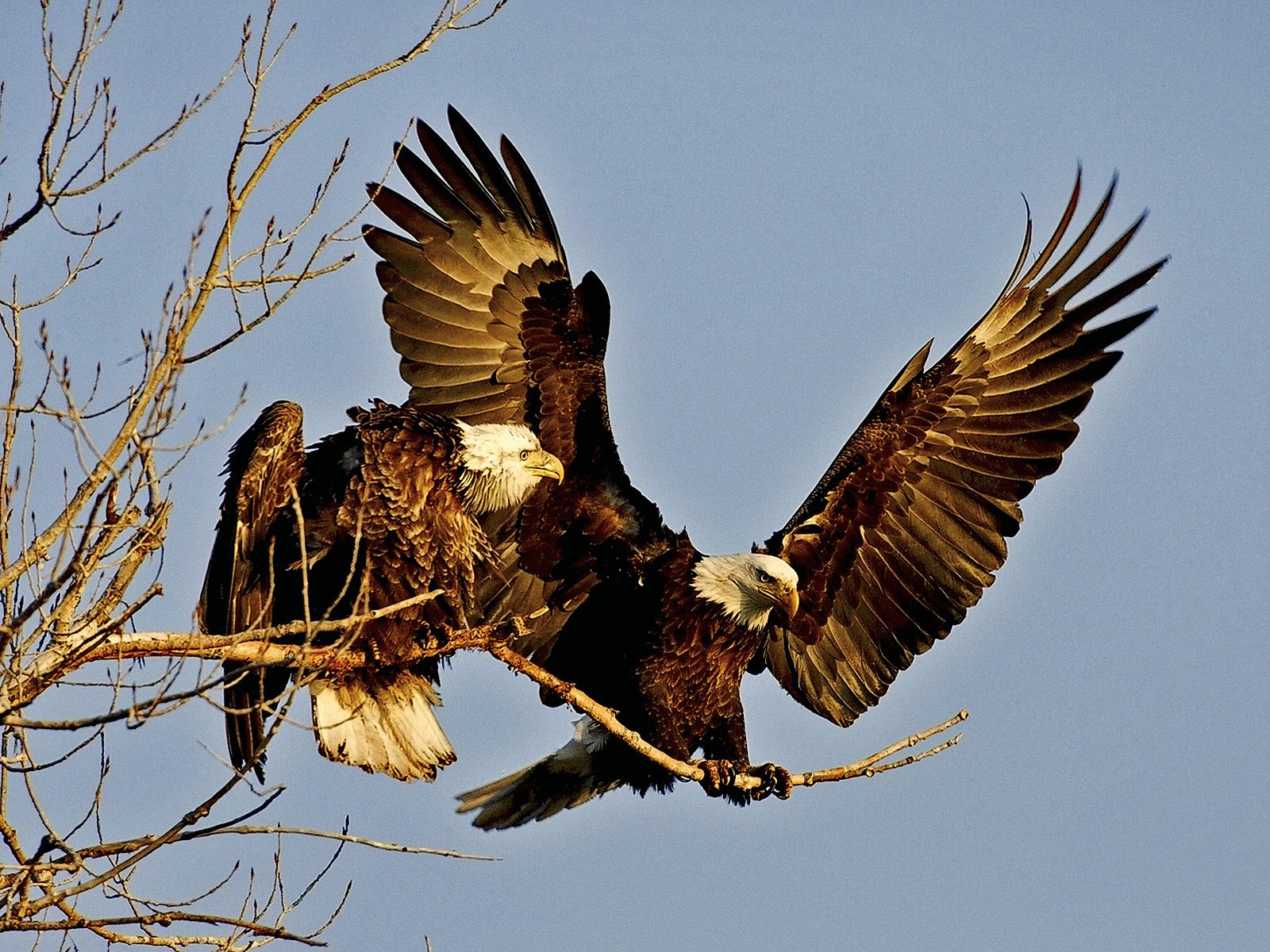 20 Interesting Eagle Facts That Will Definitely Blow Your Mind