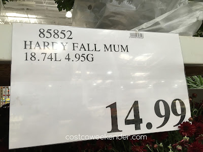 Costco 85852 - Deal for a Hardy Fall Mum at Costco