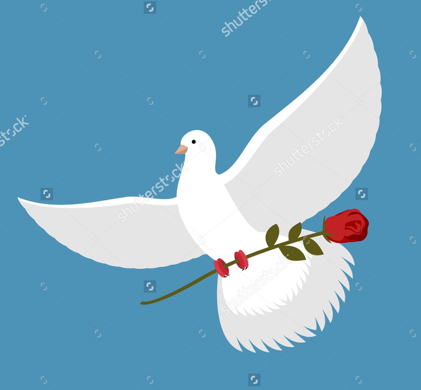 Unduh 72  Gambar Burung Merpati Membawa Bunga HD Terbaru Free