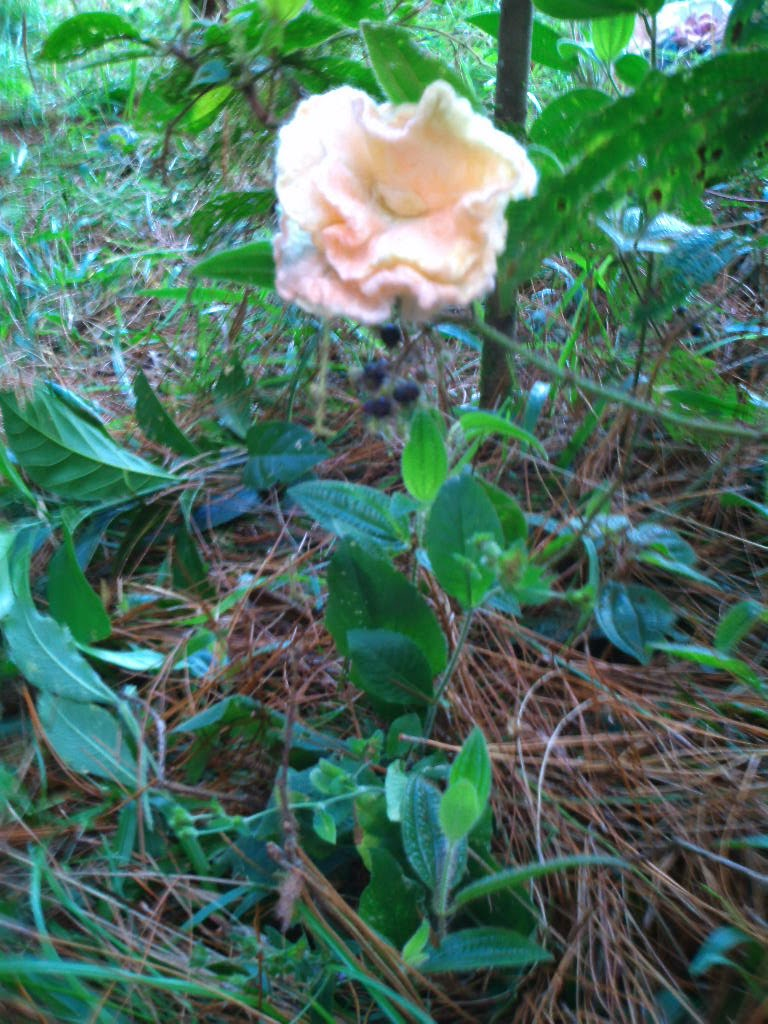 flor feltrada salmão no meio de palha de pinheiro e folhas verdes
