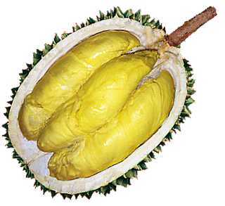 Inilah Jenis Durian Yang Cepat Berbuah Terbaik di Indonesia