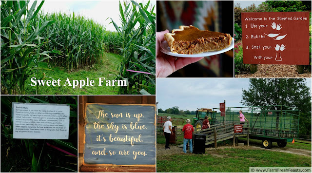 Enjoy a variety of fun family activities at Sweetapple farm like a corn maze, a wagon ride, and a scent garden. Then take home apples to make slow cooker apple butter.