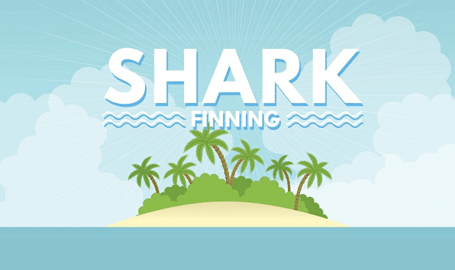 Shark Finning - The Facts Behind The Cruelty