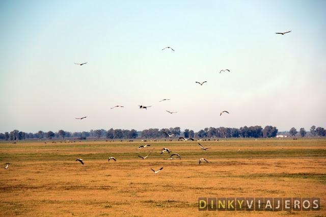 Aves levantan el vuelo en la marisma de Doñana