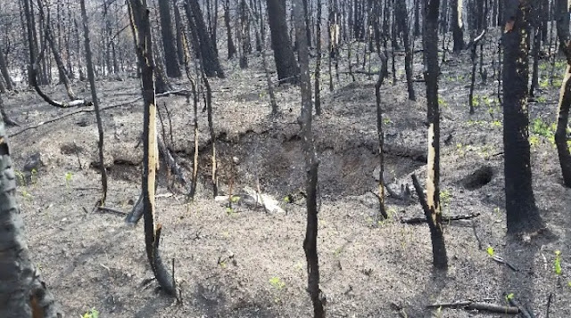 Canadian archaeologists find treasure in aftermath of giant forest fire