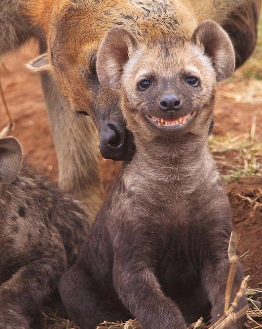 Tiernas Imágenes de Animales Sonriendo 7
