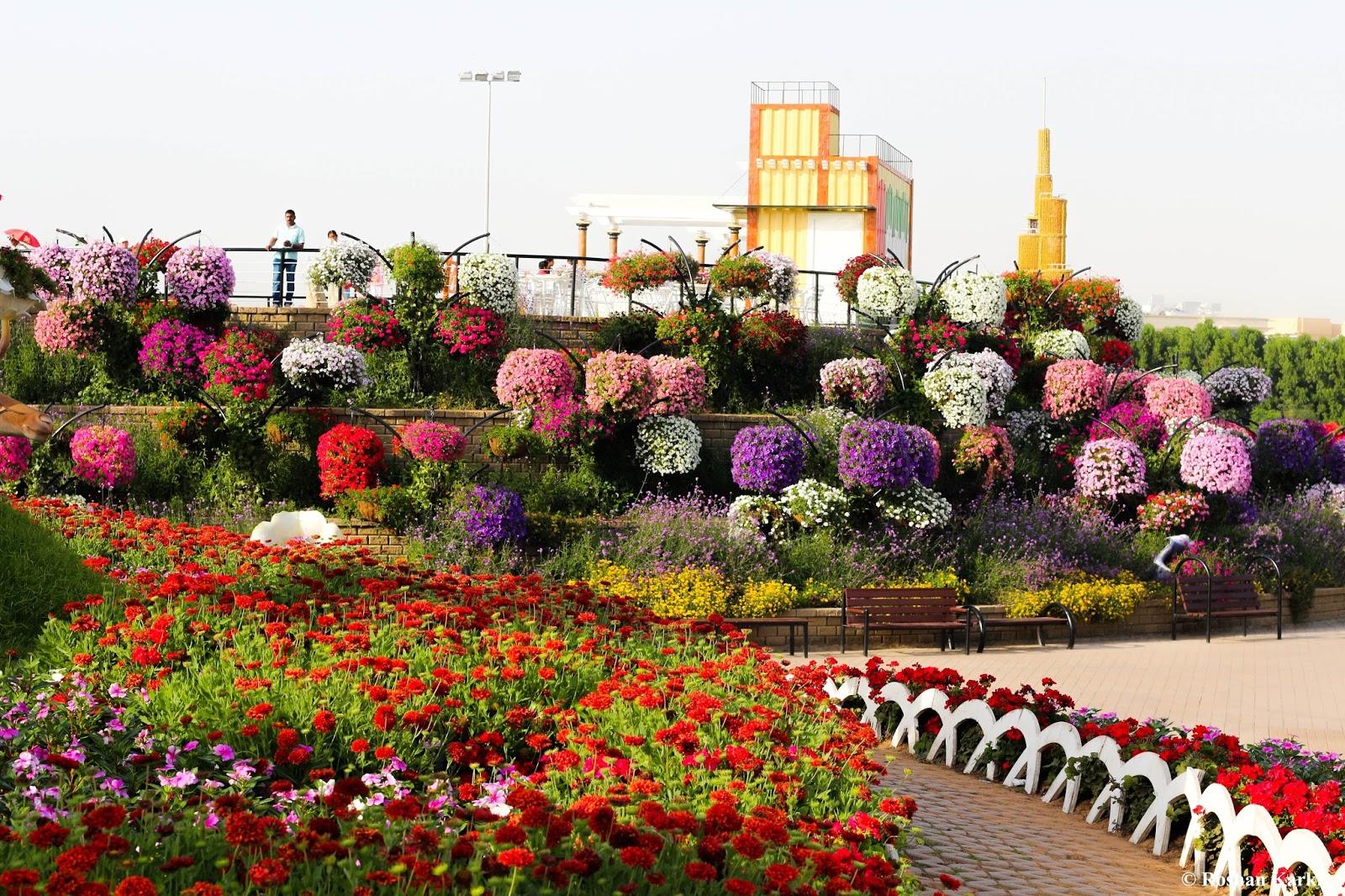 Flowers Garden | The Street Photo Blog of SankhuPalubari !!
