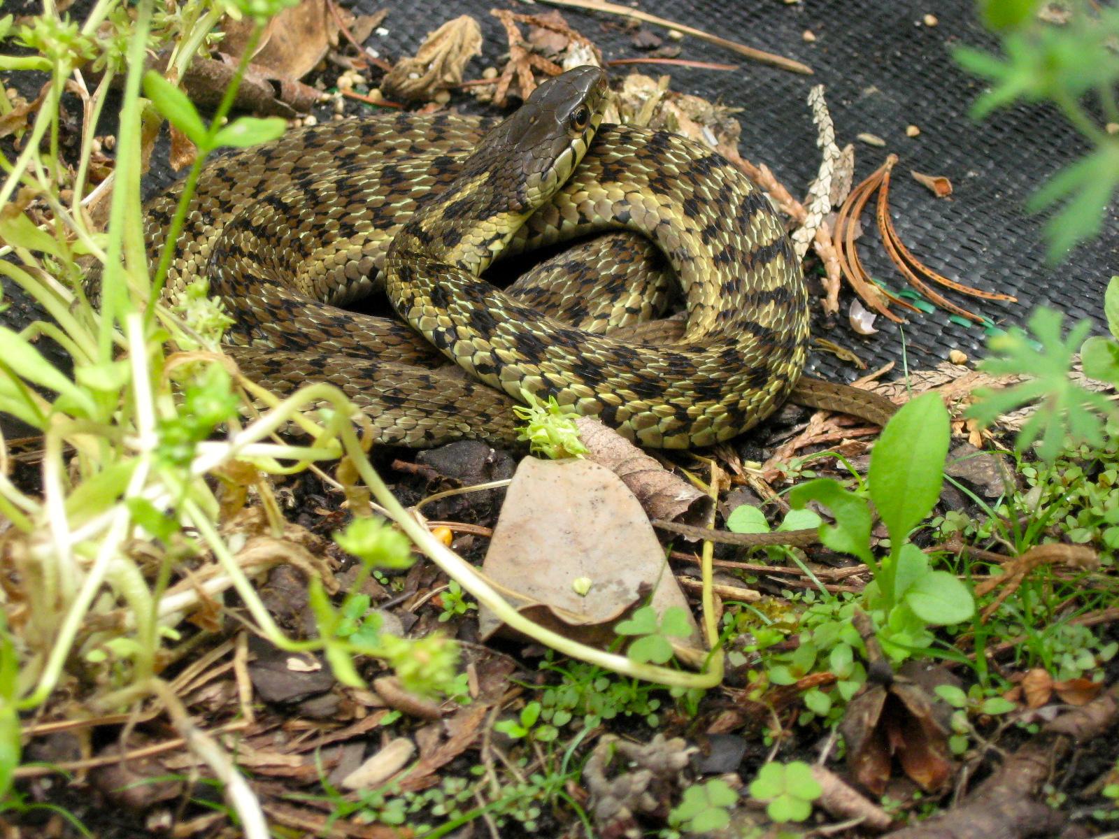 Retired in Delaware: Snakes
