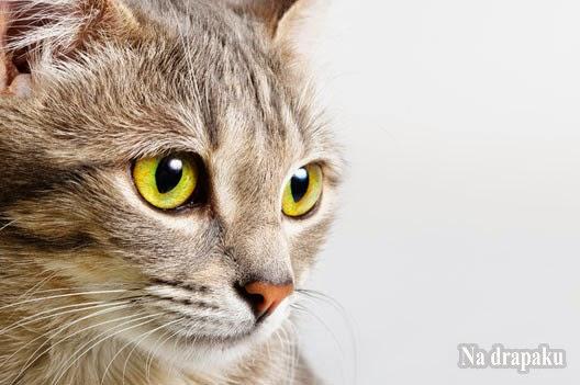 Kot – zwierzę święte i wyklęte