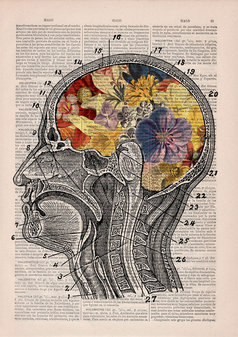 Floral Anatomical Illustrations on Old Dictionary Pages by PRRINT