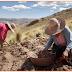 Os nativos Andinos no Peru evoluíram para comer batata