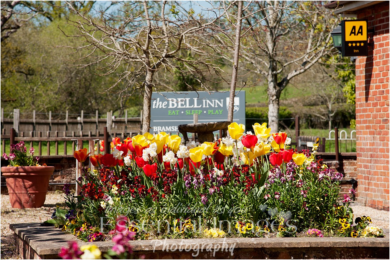 The pretty tulips at the front of The Bell Inn Bramshaw