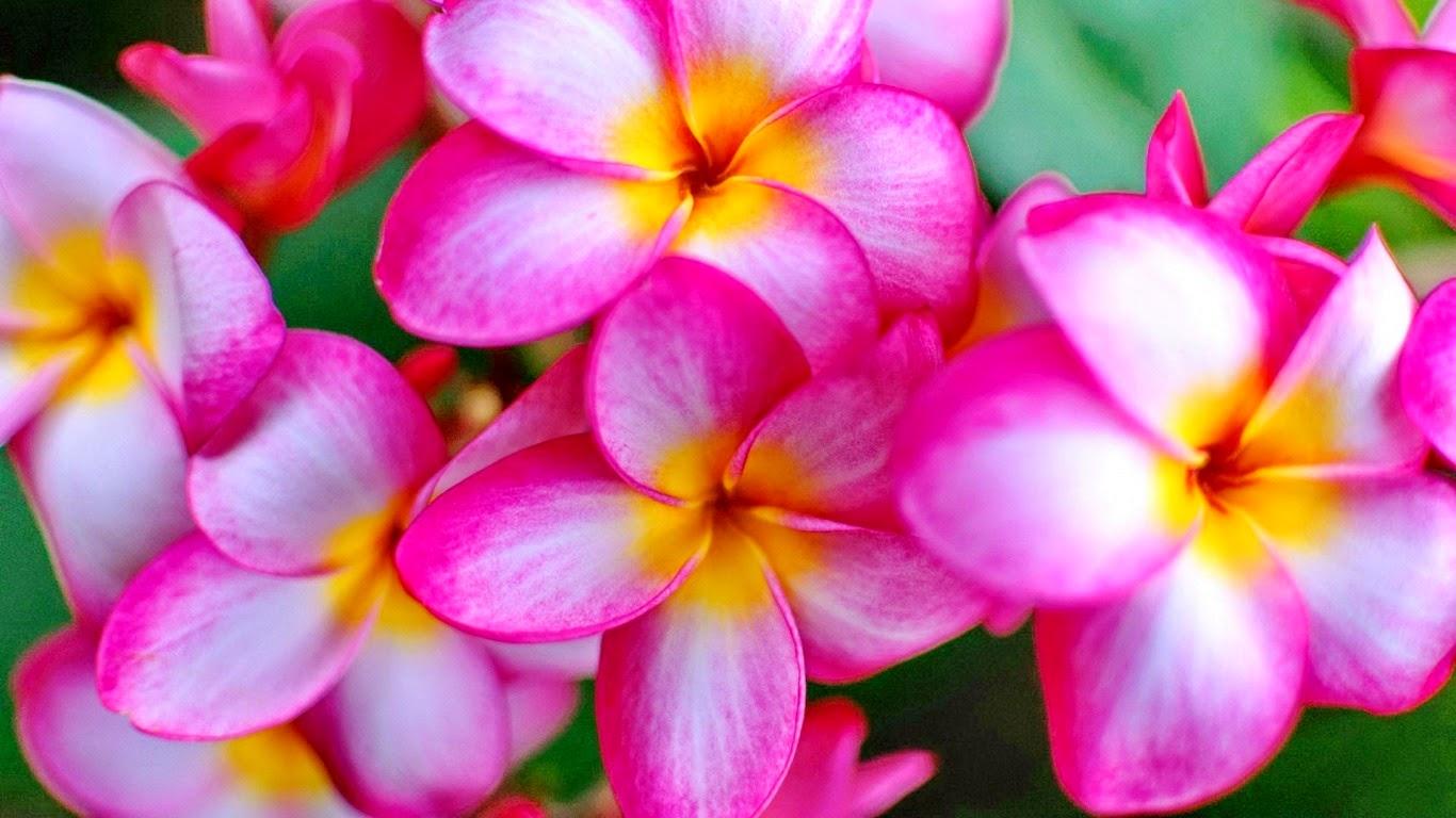 Beaux Fonds D Ecran De Jardin De Fleurs Telechargement