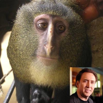 Nicolas Cage con macaco lesula