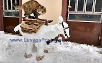 Όταν το Αμπελικο έχει όρεξη για παιχνίδια στο χιόνι- «Î¤Î¿ γαϊδουράκι του χιονιά» και   «ÎŸ μεθυσμένος χιονάνθρωπος» (ΦΩΤΟ)