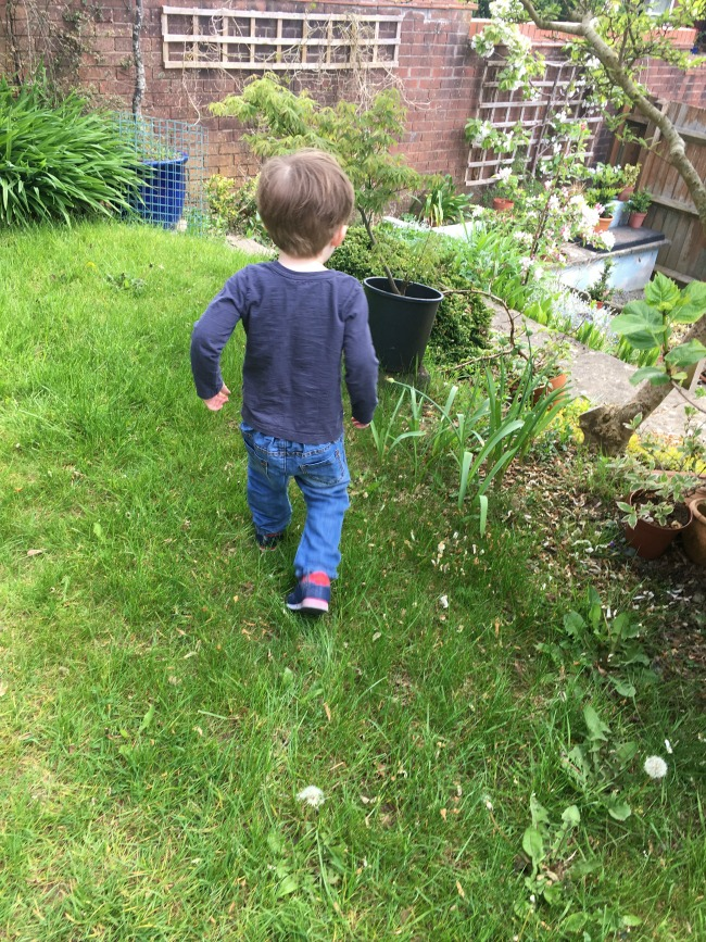 Our-weekly-journal-shopping-and-ants-toddler-walking-on-lawn
