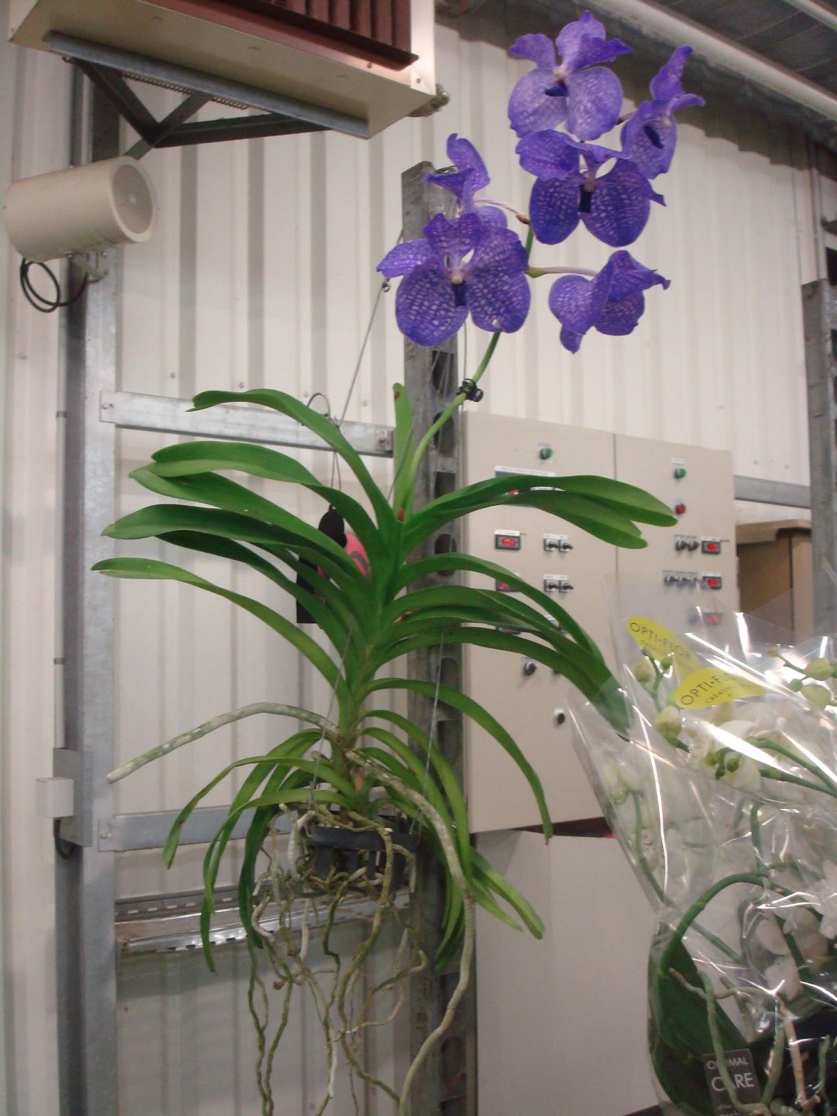 pot orchid e. Black Bedroom Furniture Sets. Home Design Ideas