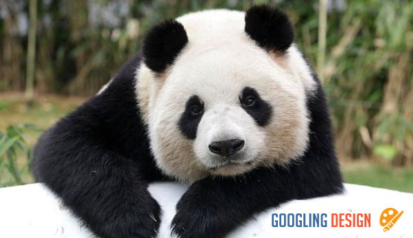Behind the Success of China Conserving the Panda Population