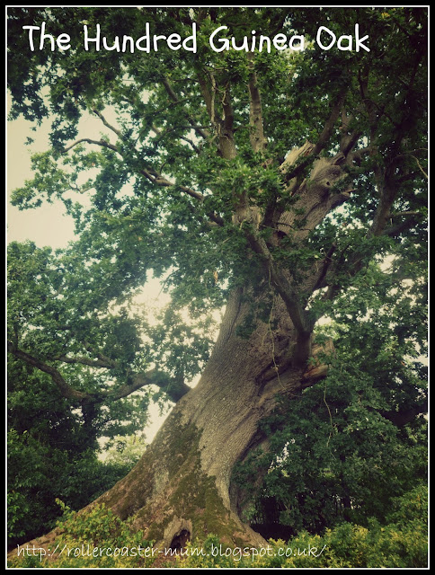 a tree to climg, the Vyne, National Trust
