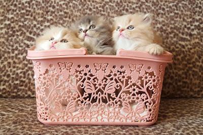 https://lalellecats.blogspot.com/p/blog-page_29.html
