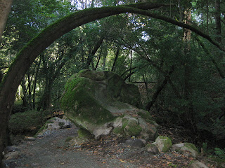 Trees arch over the John Nicholas Trail and a mossy boulder in Sanborn County Park.