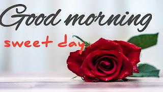 Good morning rose sayari