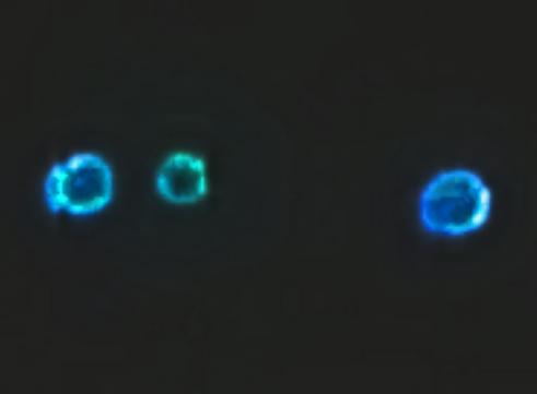 UFO SIGHTINGS DAILY: T...