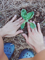 Orticoltura naturale e metodi naturali: cura delle piante