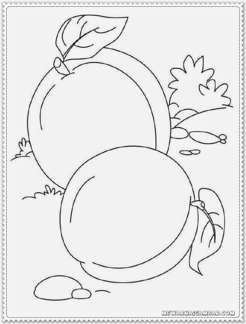 Apricot Coloring Pages To Print