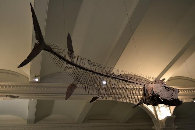Риба. Американський музей природознавства, Нью-Йорк(American Museum of Natural History, NYC)