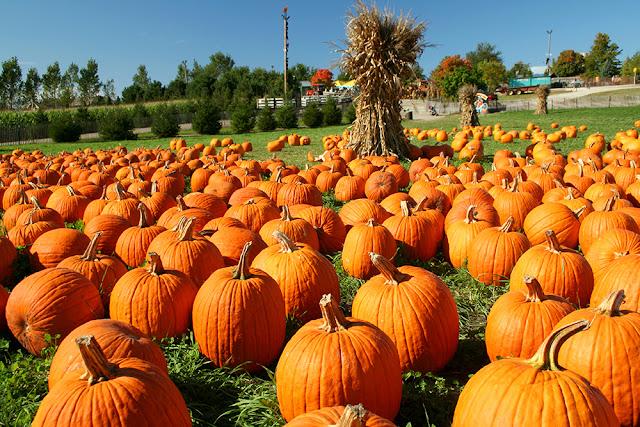 Dovleacul, vedeta Halloween
