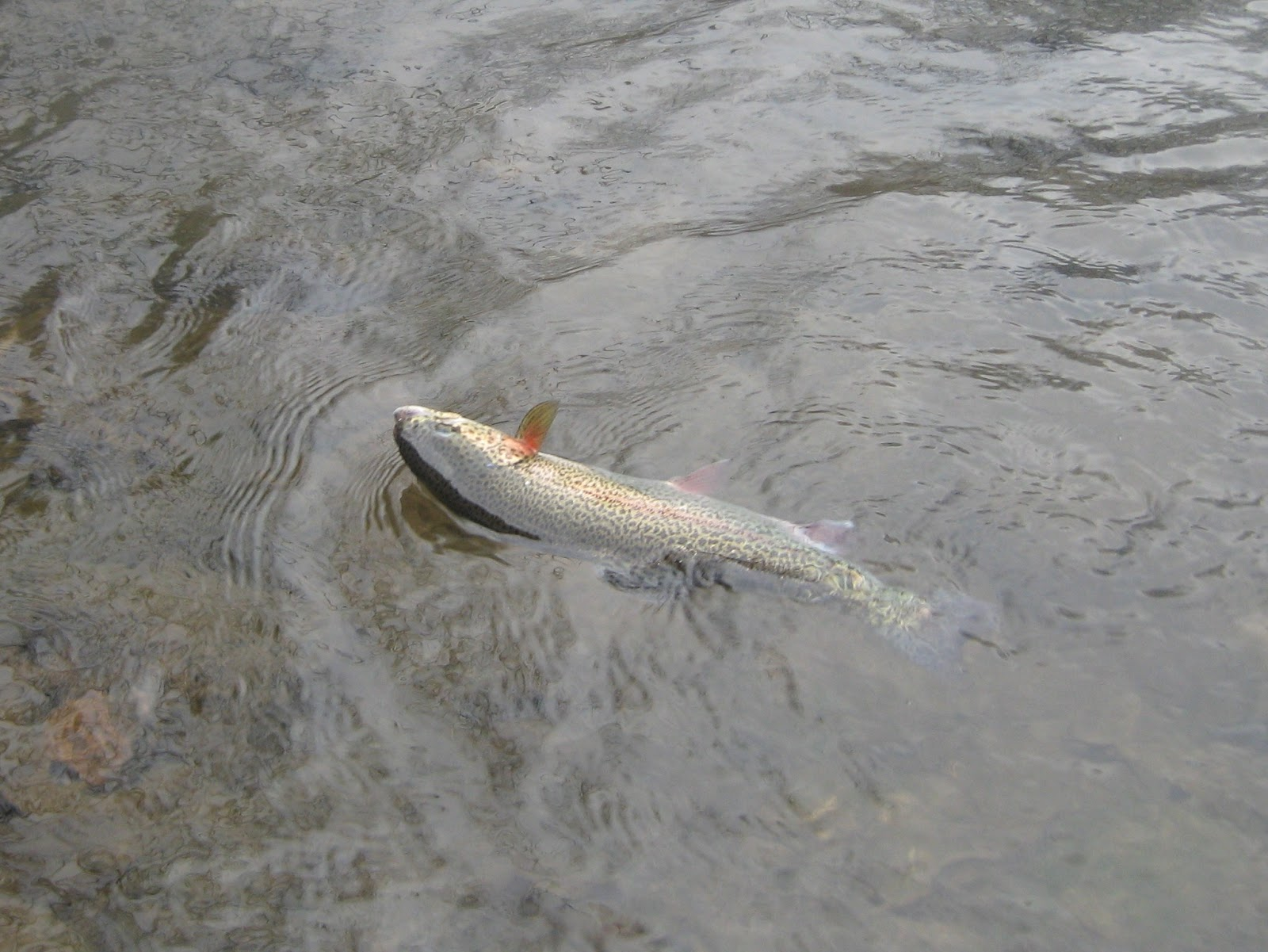 Minnesota driftless fly fishing trip report cold cold cold for Driftless fly fishing