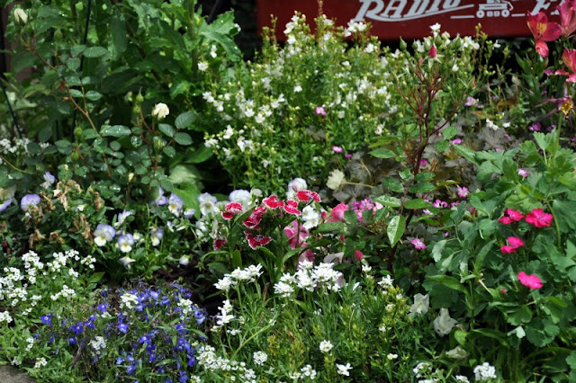 cottage garden flowers