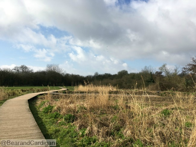Cosmeston Lakes Country Park and Medieval Village boardwalk through reeds