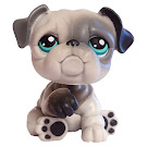 Littlest Pet Shop Tubes Bulldog (#446) Pet