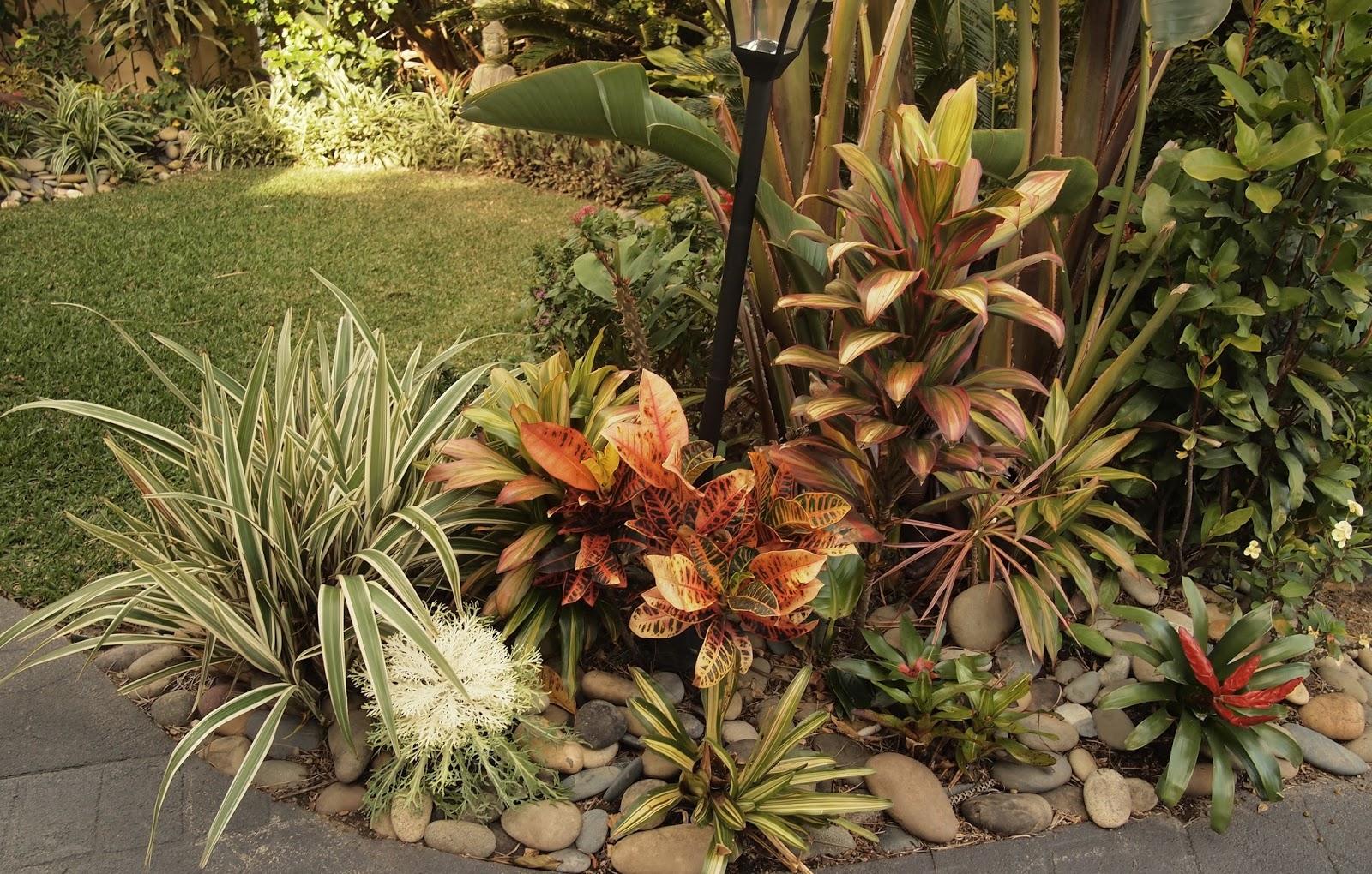 Coffs Harbour Garden Club: The Winners!