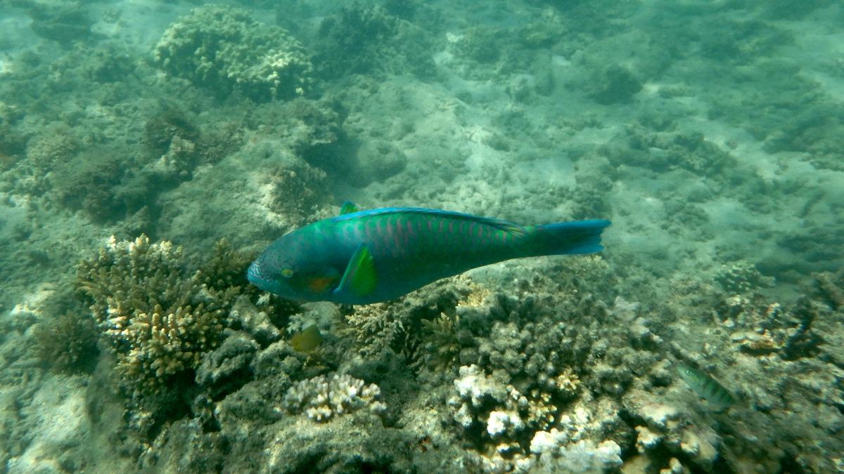 Snorkelling Fitzroy Island Queensland Australia