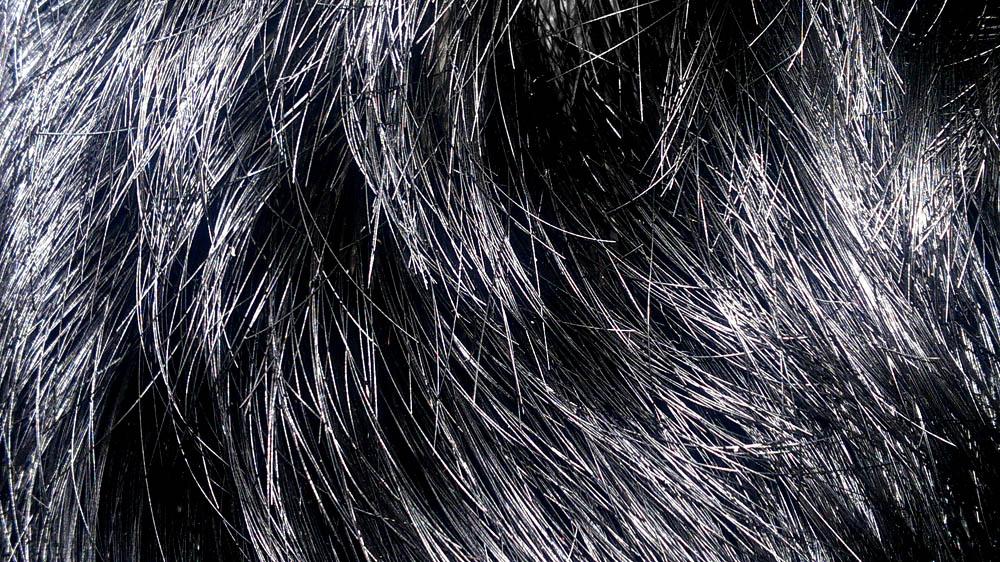 Los medios públicos para los cabellos el kéfir