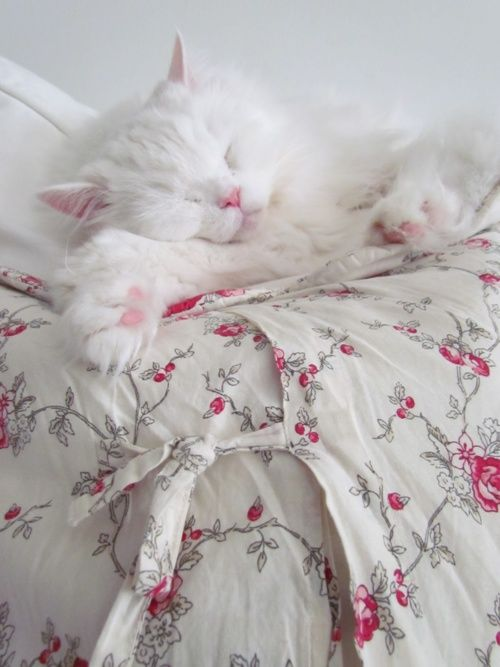 Cute white sleepy cat