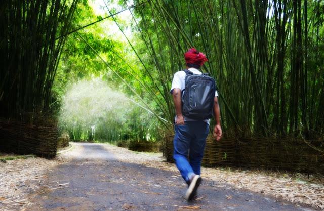 Hutan Bambu Sembalun Lombok