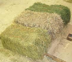 baled hay