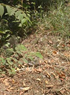 Solusi Menghilangkan Rumput di Area Rumah