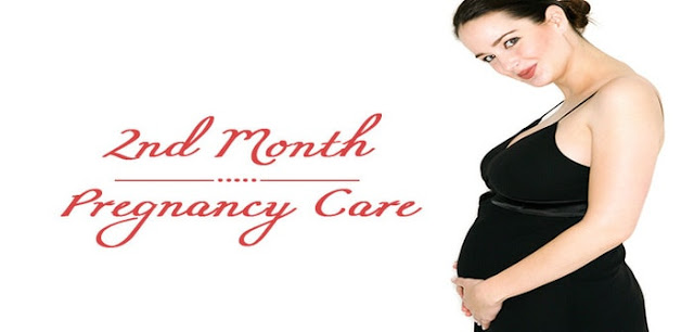 The second month of pregnancy