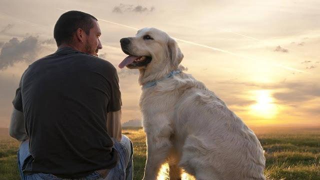 """7 volte in cui il tuo cane ha detto """"Ti amo"""" ma non te ne sei accorto"""