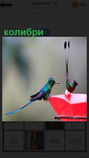 Две маленькие птицы колибри устроились на чаше красного цвета