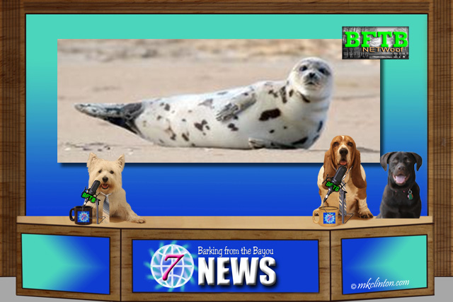 BFTB NETWoof Dog News with Harbor seal on background screen