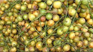 gambar buah menteng, buah rambai