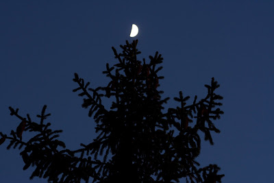 moon in tree twilight