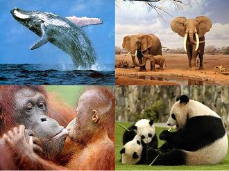 Resultado de imagem para fotos animais em extinção no mundo