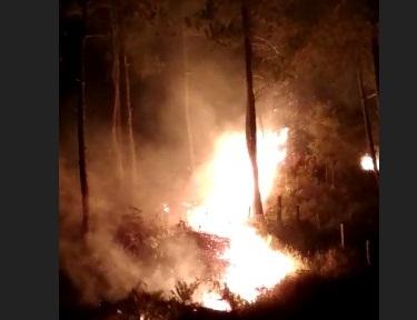 Astaga! Hutan Pinus Mapongka Mengkendek, Terbakar